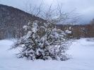Ciaspolata sulla neve _13