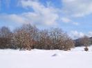 Ciaspolata sulla neve _18
