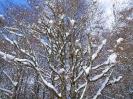 Ciaspolata sulla neve _1